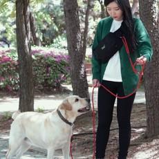 강아지 산책가방